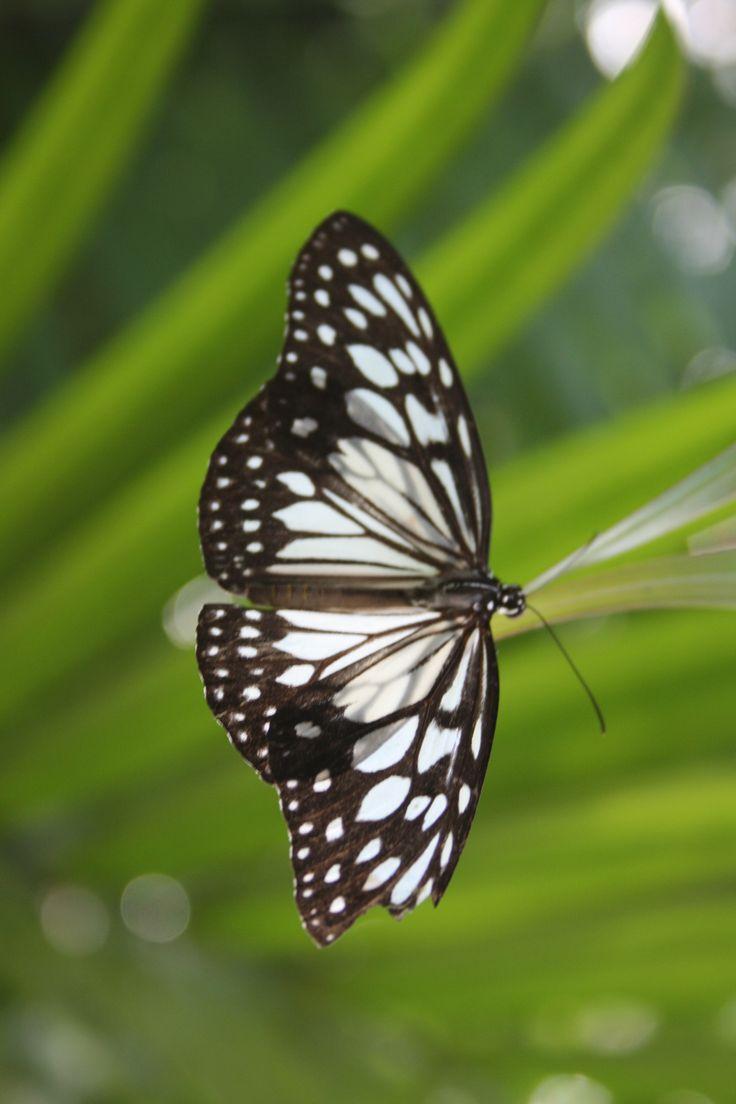 butterfly garden, bohol, philippines