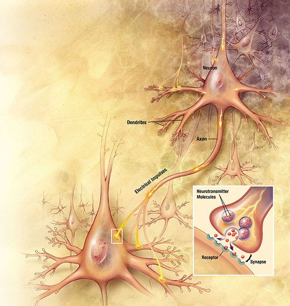 Neuronal Transmission  www.nia.nih.gov/...: God Will, Chronic Pain, Nervous System, Brain Science, Scriptures Study, Bath Salts, Fibromyalgia Pain, The Brain, Bipolar Disorders