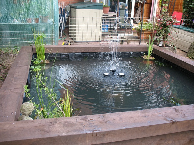1000 images about pretty fish ponds on pinterest for 1000 gallon fish pond