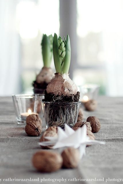 bulbs + tea lights + walnuts centerpiece