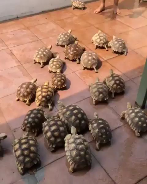 La invasión de tortugas   – Turtles & Tortoises