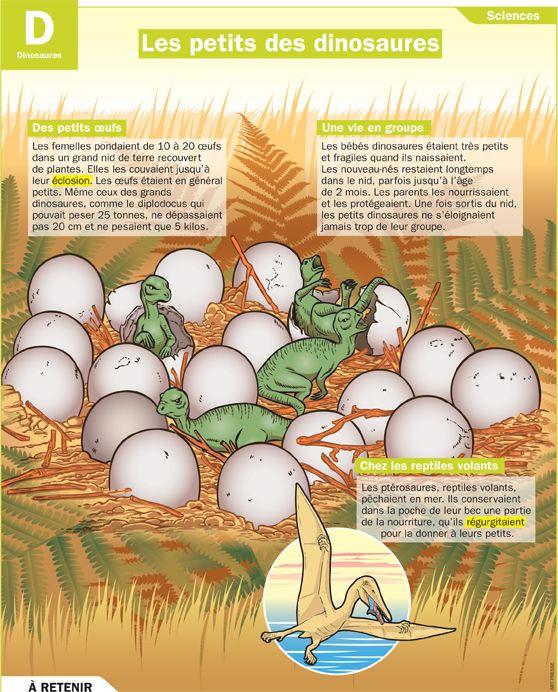 Fiche exposés : Les petits des dinosaures