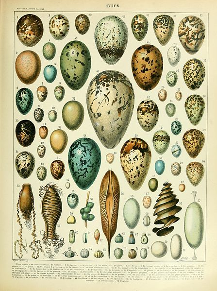 Eggs illustration of the Nouveau Larousse illustré, Adolphe Millot, public domain via Wikimedia Commons.