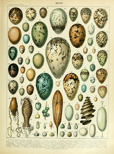 Eggs illustration of the Nouveau Larousse illustré, Adolphe Millot, public domain via Wikimedia Commons.