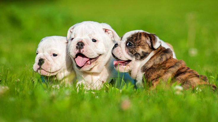 Happy National Dog Day! Show us your adorable doggy pics