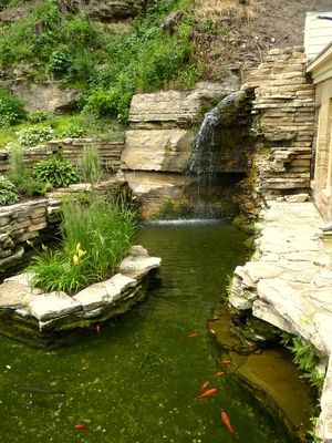29 best koi pond images on pinterest backyard ponds for Koi pond overflow
