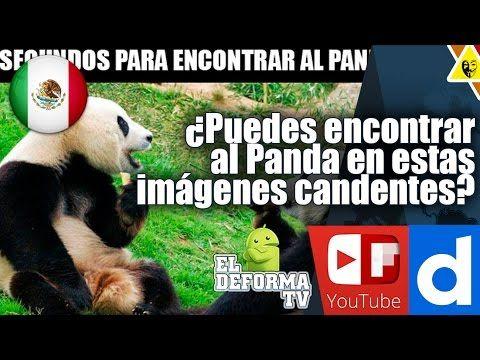 Puedes encontrar al Panda en estas imágenes candentes