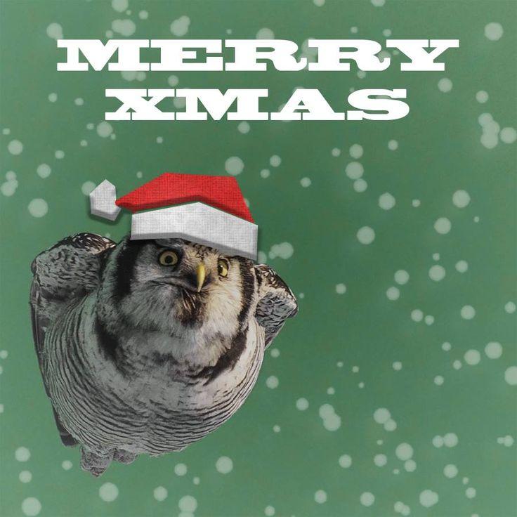 Merry Xmas from Torpedo owl! https://www.facebook.com/torpedoowl