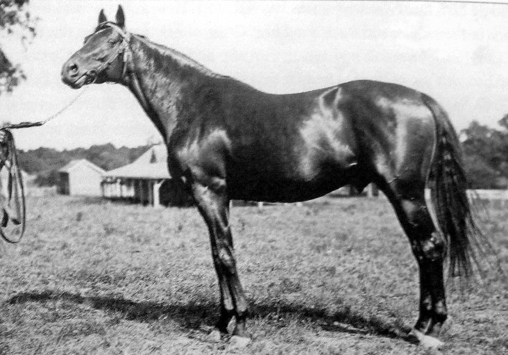 Rock Sand was an ill-tempered British Thoroughbred race horse & sire. He ran 20 times & won 16 races. After being a leading British 2-year-old of his generation he became the 10th winner of the Triple Crown in 1903, winning the 2,000 Guineas Stakes the Epsom Derby & the St. Leger Stakes. He won another series of major races as a 4-year-old before being retired to stud, where he had success in both Europe & North America. He is best know as being the broodmare sire of Man o' War (Mahubah).