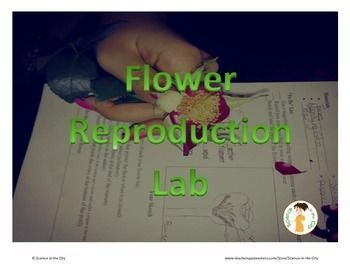 Keywords:  stamen, pistil, ovary, dissection, reproduction, sexual, asexualThis product includes two versions of a flower reproduction lab.  One version is a more traditional lab, and the other is slightly more open-ended, or inquiry based.  Both versions