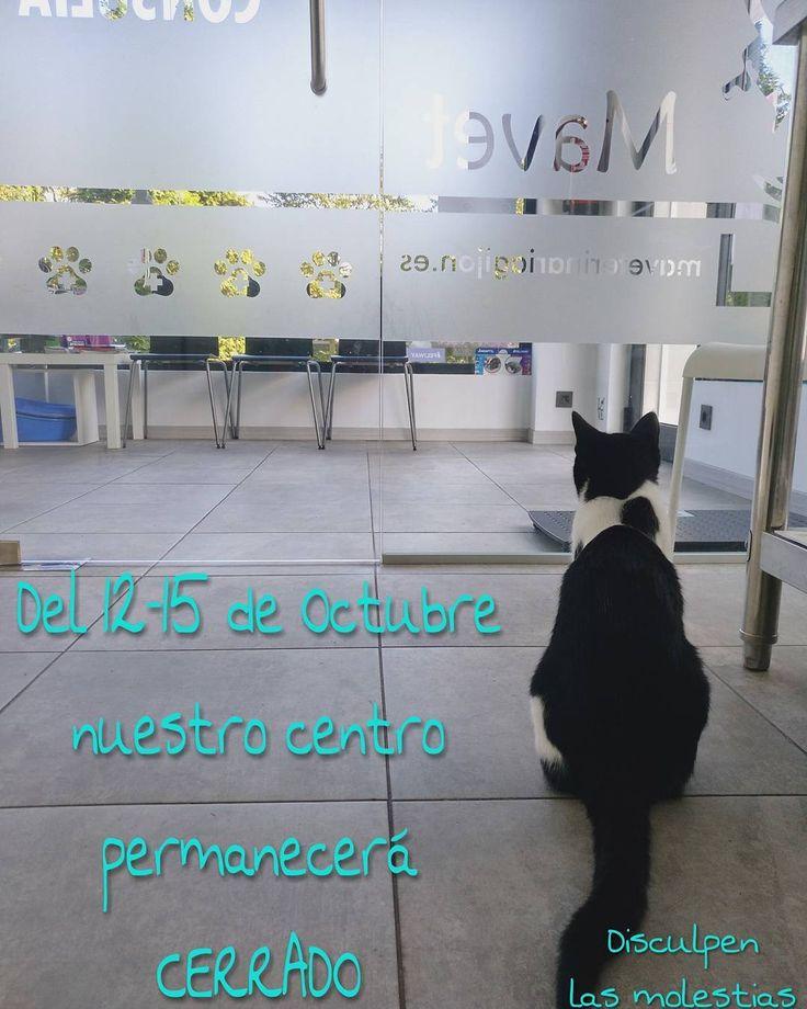 Os queremos adelantar que del 12-15 de octubre (ambos incluidos) permaneceremos cerrados por descanso del personal.  Ante cualquier urgencia Hospital Nacho Menes calle campo sagrado 16(zona del Coto) Tlf 985366511  Disculpen las molestias  #veterinaria #vet #veterinarian #veterinario #clinic #clinica #animal #purina #Gijón #asturias #asturias_ig #instamood #dog #perro #pet #cat #artesano#natural #petstagram #mascota #mascotas #instacool #photo #foto #happy #fotodeldia #photooftoday #love…