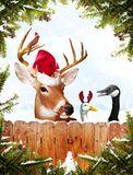 Christmas animals Royalty Free Stock Photography