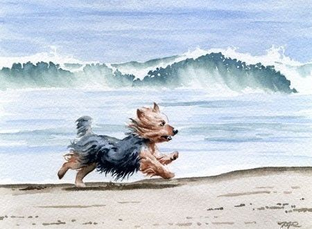 YORKSHIRE TERRIER Art Print Dog Watercolor Signed por k9artgallery