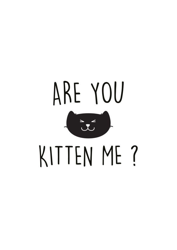Are you kitten me? ★ iPhone wallpaper