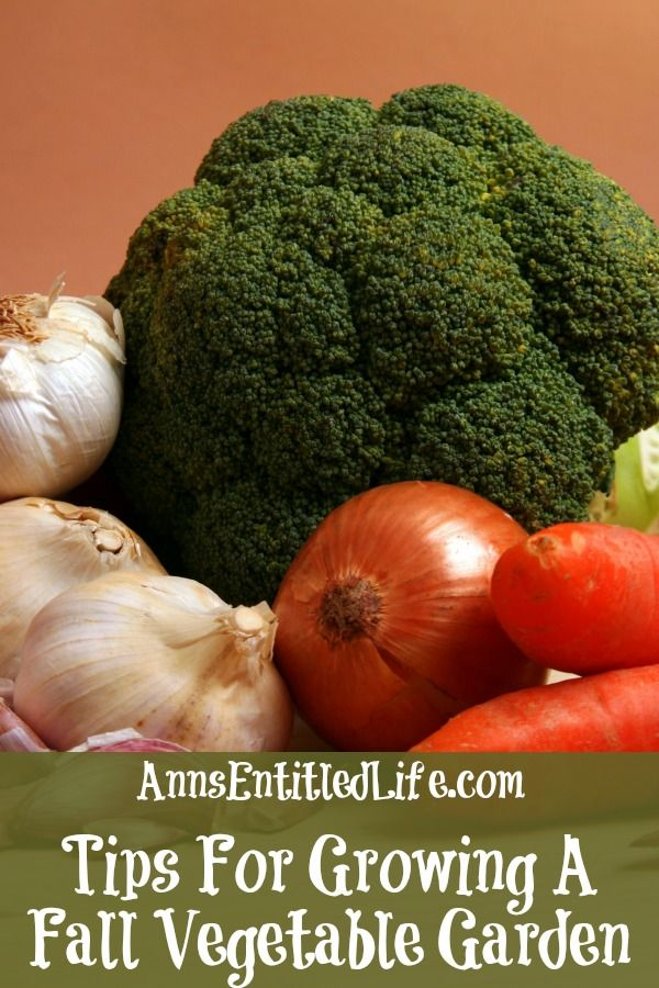 Tips For Growing A Fall Vegetable Garden http://www.annsentitledlife.com/produce/tips-for-growing-a-fall-vegetable-garden/