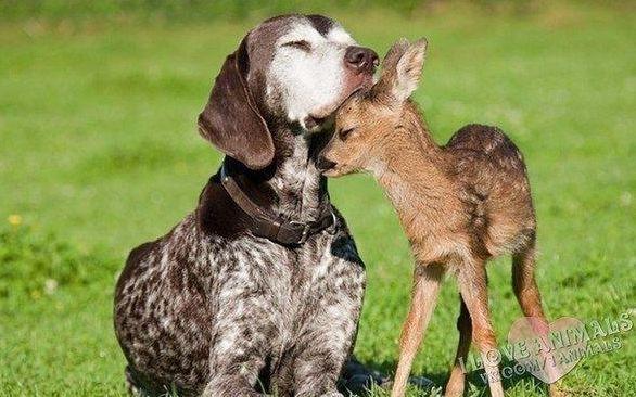 Если душа - это умение любить, быть преданным и благодарным, то животные обладают ею в большей степени, чем многие люди.    Джеймс Херриот
