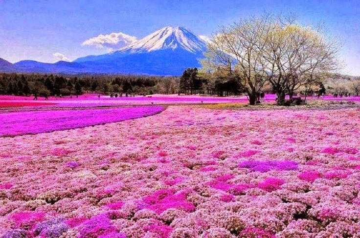 Melakukan perjalanan keluar negeri merupakan hal yang sangat menyenangkan. Namun mengunjungi negara yang berbeda musim seperti Jepang, tentu Anda harus mempersiapkan segala sesuatunya dengan lebih seksama. Jangan sampai liburan Anda ke tempat wisata di Jepang menjadi rusak hanya karena Anda kurang memahami musimnya. Jepang adalah negara yang memiliki 4 musim, kuran lebih 3 bulan sekali musim akan berganti.