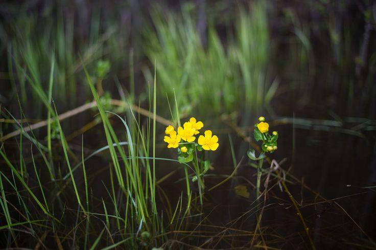 https://flic.kr/p/sUqaNT | Yellow flower