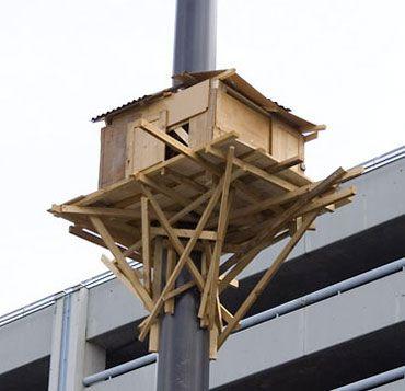Tadashi  Kawamata :  Tree Hut