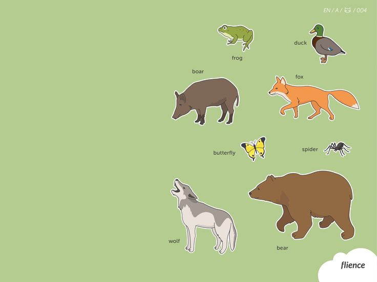 Animals-meadow_004_en #ScreenFly #flience #english #education #wallpaper #language