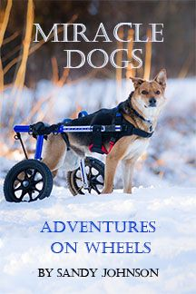 iracle Dogs - Adventures on Wheels by Sandy Johnson is a collection of stories, both heartwarming and heartbreaking of dogs—and a goat --their owners, and their second chances. You'll meet pets who as a result of illness or injury had become disabled, causing their owners to make difficult choices.