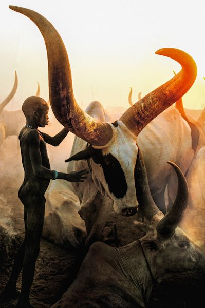 Dinka Boy with Long Horned Bull, South Sudan.  http://carolbeckwith-angelafisher.com/collections/collection-dinka/dinka-boy-with-long-horned-bull-south-sudan/#