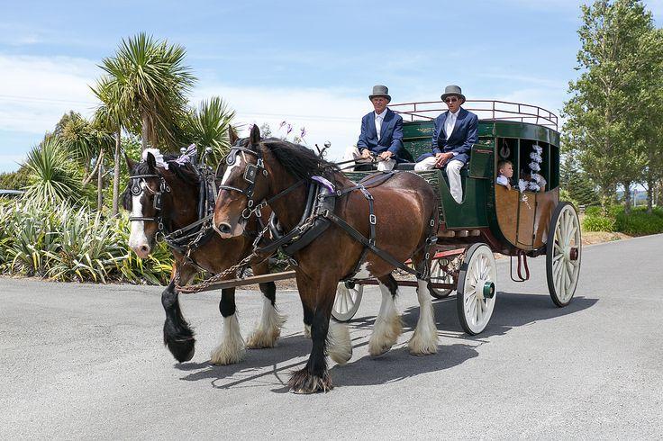 The ultimate wedding limo - horse drawn fun at Brackenridge wedding venue in Martinborough, Wairarapa.  Von Photography