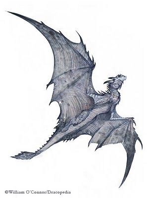 The Dracopedia Project: great Icelandic White dragon
