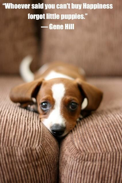 Make your family happy with one of the numerous puppies and dogs available for adoption in Las Vegas. Silverton is donating a portion of the proceeds from this year's One Drunk Puppy Wine Tasting Event this August 17th to 5 Las Vegas rescue shelters. Purchase tickets and help find these sweet animals a home.