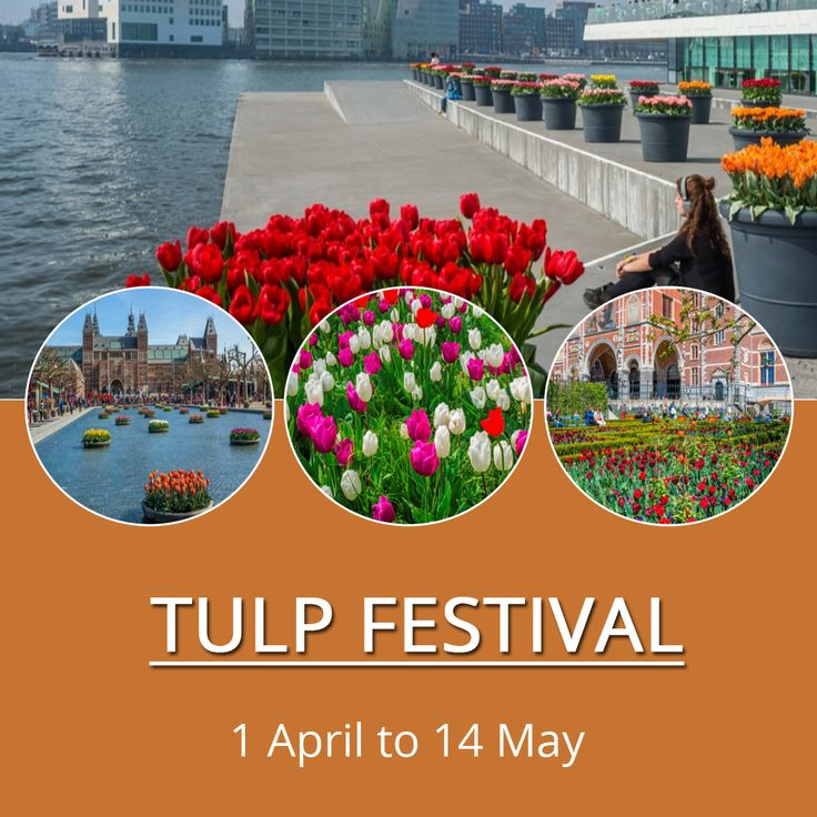 The tulip is one of the most enduring symbols of the Netherlands and Amsterdam. Originating from the Ottoman Empire and introduced to Dutch merchants at the beginning of the 17th century, it has had a lasting economic impact from the Golden Age to the present day. Celebrate the famous Dutch flower at the Tulp Festival in Amsterdam. #WFA #WorldFashionApartments #Tulip #TulpFestival #Festival #Amsterdam