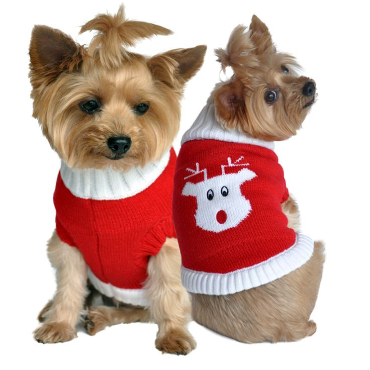 Rudolph Red Nosed Reindeer Dog Sweater in Color Red