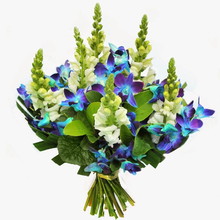 Urban Flower Blog | Sydney's freshest flowers | Weddings & Events |  Order by 2pm for Delivery Today | Open Monday to Saturday 7am-11pm | 02 9745 1668