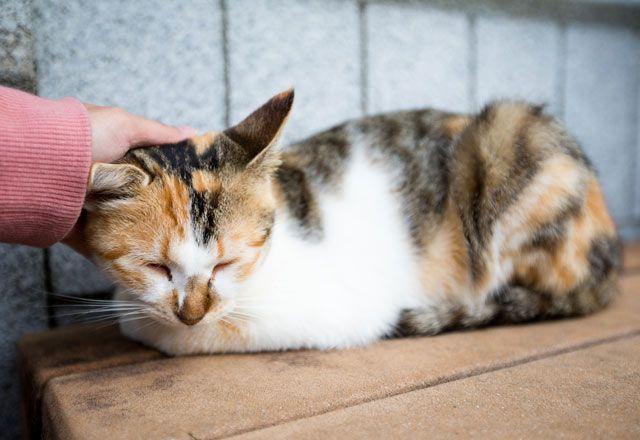 Kedi ve köpek gibi ev hayvanlarının tetiklediği alerjiler oldukça yaygındır. Kedi alerjisinin belirtileri nelerdir?, Kedi Alerjileri ve Tedavisi Nasıl