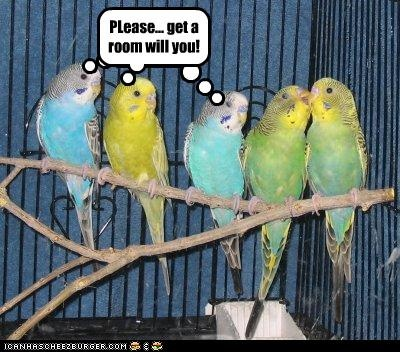 17 best images about funny bird graphics on pinterest