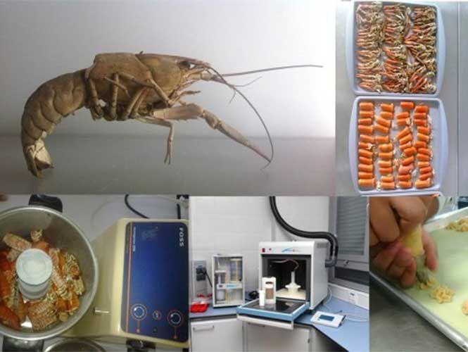 Se trata de un suplemento alimenticio con glucosamina extraída de la cáscara de un crustáceo, diseñado por investigadores de la Universidad Autónoma de Aguascalientes