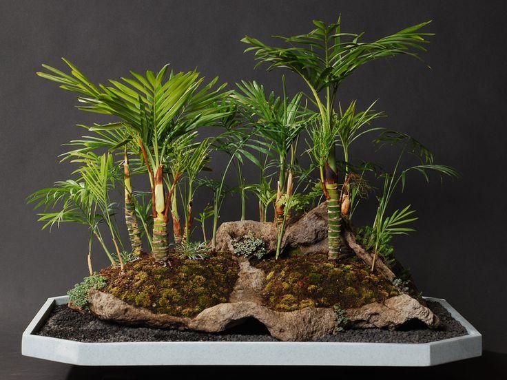 Parlor Palm Indoor Bonsai RealPalmTrees.com