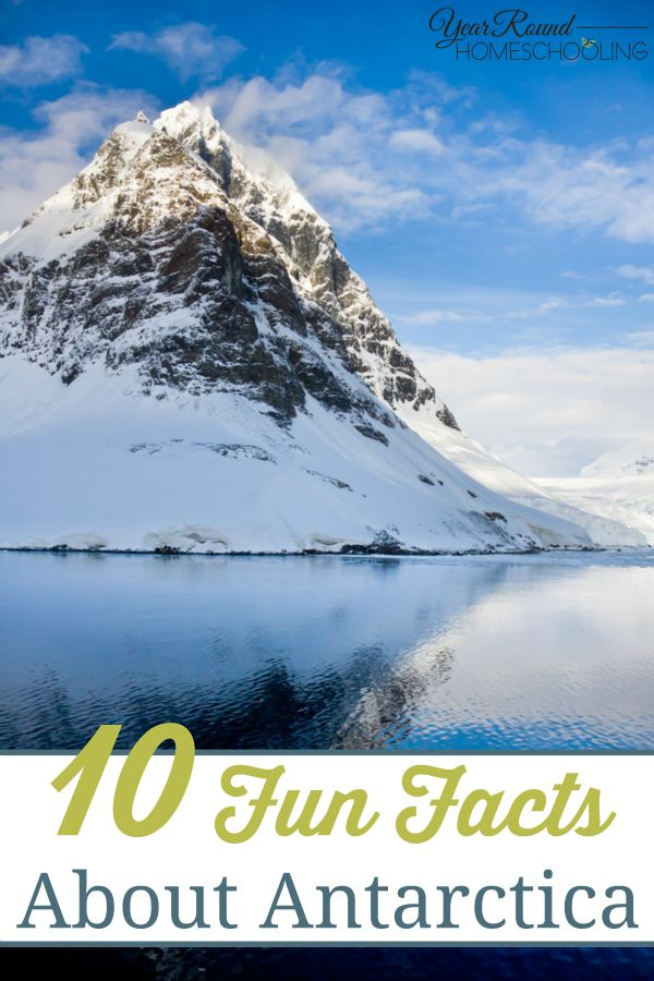 Best Fun Facts About Penguins Ideas On Pinterest Rare - 18 shocking facts nature