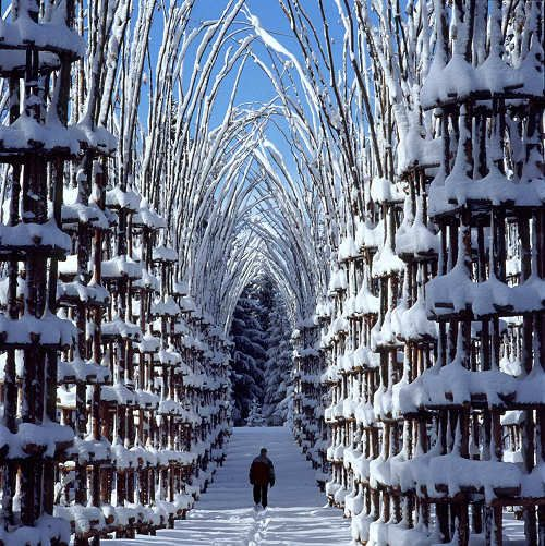 Cattedrale naturale di Artesella