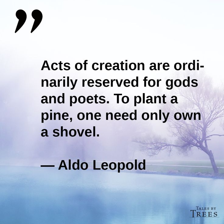 Foresters Quick Quote Awesome 58 Best Aldo Leopold Hero Images On Pinterest  Aldo Leopold Quotes