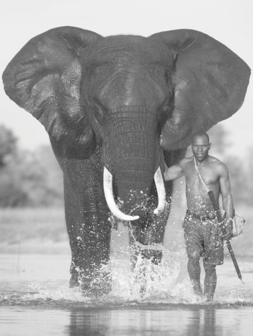 http://www.mariosoria.com/African Elephant, Best Friends, Amazing Pictures, Majestic Photos, African Wildlife, Photography, Beautiful Creatures, African Mahout, Animal