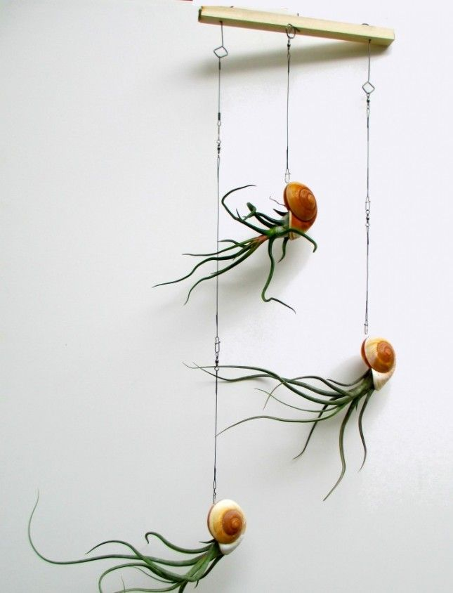 13 Weird Plants You Didn't Know You Needed via Brit + Co