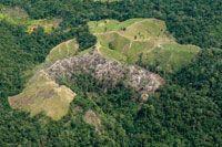Destrucción de bosques para adecuación de potreros.