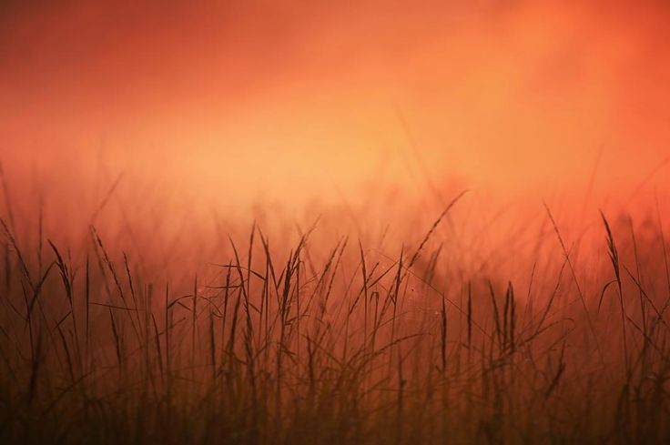#beautiful #morning #sunrise #autumn #awesome #field #sun #befogged #foggy #nature #grassland #moor #coldanddampoutside #fun #pictureoftheday #red #orange #naturelovers #landscape #herbst by vincentvillnow