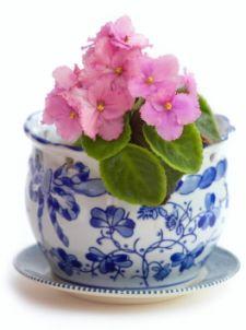 Tips for African Violets