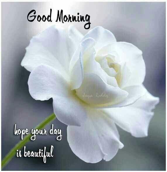 Good Morning Hope your day is beautiful