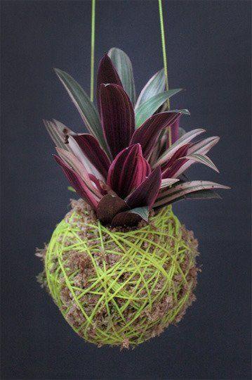 Buy or DIY: Moss Ball Hanging Plants