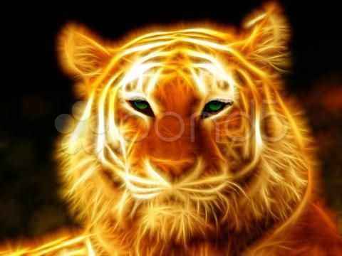 tigerfire - Stock Footage | by gmtech