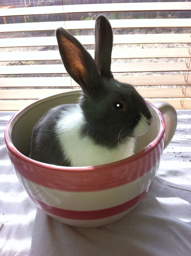My little boy in his teacup ❤️