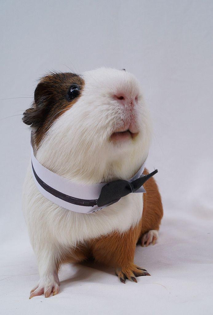 Handsome piggy