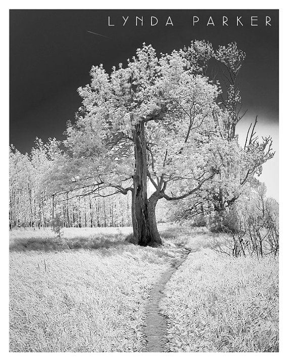 Tree Black and White Giclee Photograph - 8x10 on Etsy